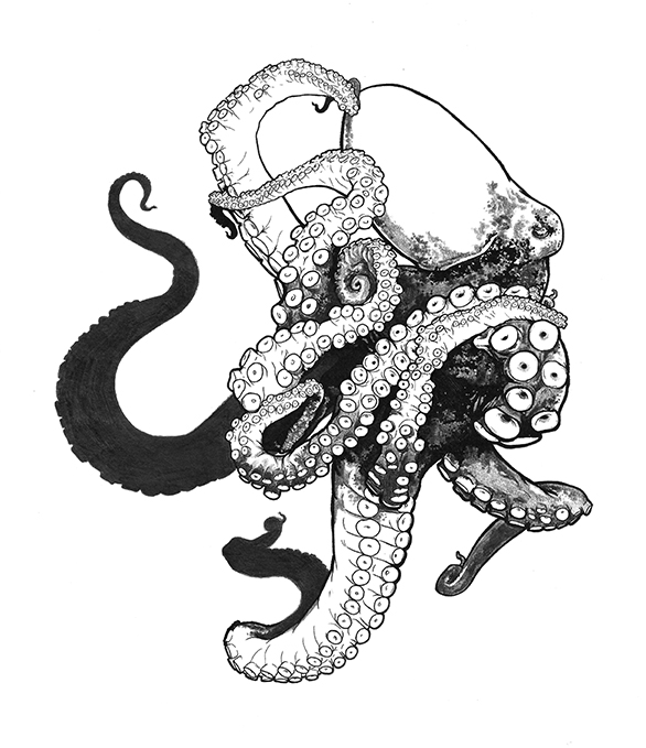 realistic octopus sketch